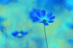在领域的美好的精美背景绘的蓝色花 免版税库存照片
