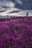 在领域的美好的英国乡下风景在日落wi 免版税库存图片