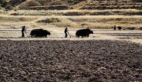 在领域的耕种 免版税库存照片