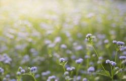 在领域的草花 库存图片
