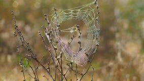 在领域的蜘蛛网 免版税库存照片