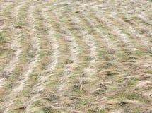 在领域的被收割的干草 免版税图库摄影