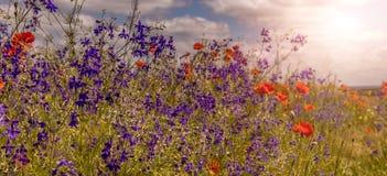 在领域的许多五颜六色的花,发光在阳光下 背景蓝色云彩调遣草绿色本质天空空白小束 免版税库存照片