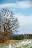 在领域的边缘的一棵老树 免版税库存图片