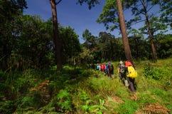 在领域的远足者步行 库存图片