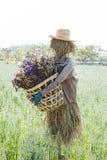 在领域的逗人喜爱的稻草人 免版税图库摄影