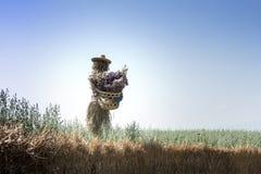 在领域的逗人喜爱的稻草人 库存图片