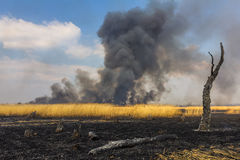 在领域的野火与与一棵被烧的树的干草 免版税库存照片