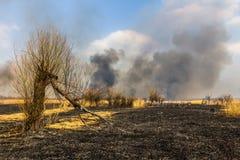 在领域的野火与被烧的干草和被烧的树 免版税库存图片