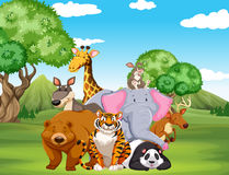 在领域的野生动物 库存例证