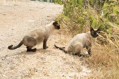 在领域的野生猫 库存照片