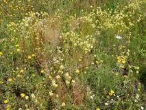 在领域的野花 库存照片