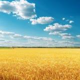 在领域的金黄庄稼和与云彩的蓝天 图库摄影