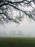 在领域的雾 库存图片
