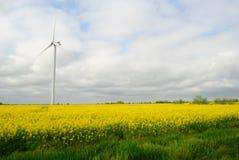 在领域的风车 库存图片