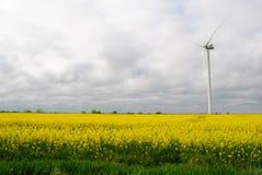 在领域的风车 库存照片