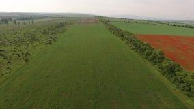 在领域的飞行与红色花,播种与领域和一个未加工的领域 鸟` s眼睛视图 股票录像