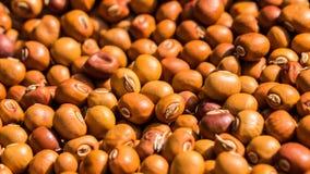在领域的飞过的豆种子 免版税库存图片