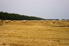 在领域的黄色秸杆卷在收获麦子以后反对一条灰色蓝色天空和森林传送带 谷物丰收的末端 免版税库存图片