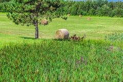在领域的黄色干草 免版税图库摄影