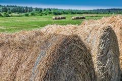 在领域的黄色干草 免版税库存图片