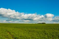 在领域的绿色麦子在蓝天下 免版税库存图片