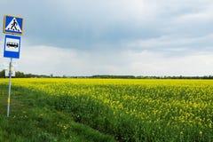 在领域风景的黄色花 免版税库存照片