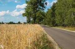 在领域麦子和森林波兰之间的路 免版税图库摄影