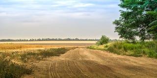 在领域麦子和绿色森林之间的夏天多灰尘的乡下公路蓝天背景的 库存照片