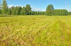 在领域,一旦草被剪 图库摄影