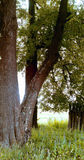 在领域,太阳亮光,篱芭的树 库存图片