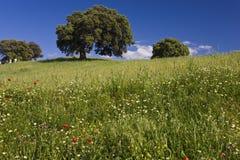 在领域,西班牙的野花 免版税库存照片