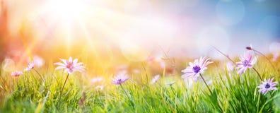 在领域-抽象春天风景的雏菊 免版税库存图片