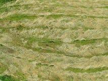 在领域-背景的干草干燥 库存照片
