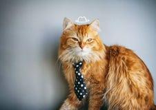 在领带的严肃的红色猫 图库摄影