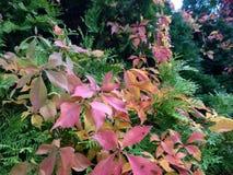 在颜色叶子的秋天 免版税库存照片