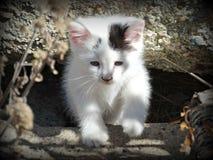 在颜色的一只农厂小猫 免版税库存图片