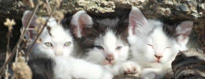 在颜色的三只小的偎依的小猫 免版税库存照片