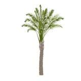 在颜色的枣椰子树 图库摄影