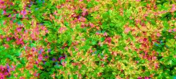 在颜色的用花装饰的印刷品 免版税图库摄影