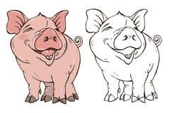 在颜色的逗人喜爱猪和黑白 库存照片