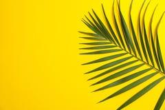 在颜色背景的美丽的热带棕榈叶 免版税库存照片