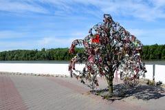在额尔齐斯,鄂木斯克,俄罗斯银行的爱护树木  免版税图库摄影