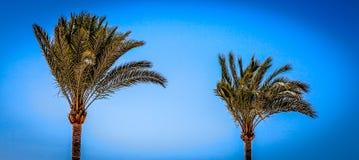在风下的棕榈树 免版税库存照片