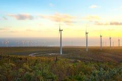 在风力场的风车在智利 免版税库存图片
