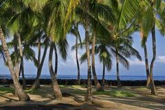 在风夏威夷的棕榈树波浪 免版税库存图片