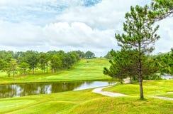 在风大叻高尔夫球里面的杉树 免版税库存照片