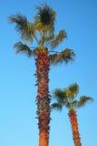 在风弯曲的棕榈树 库存图片