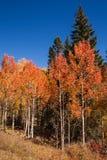 在风景小路的秋天颜色 免版税库存照片