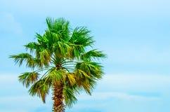 在风景旅行目的地的热带棕榈树 免版税库存图片